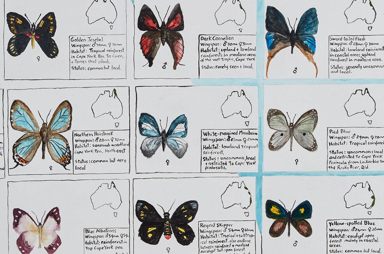 Noel McKenna, Australia b.1956 / Butterflies of Australia 2010